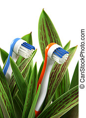 Natural care - Toothbrushes growing like flowers, over white...