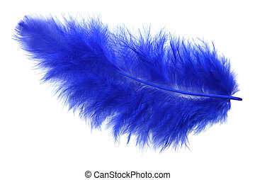 Blue feather isolated on white