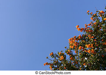 Shrub with red berries over a shaded blue sky horizontal