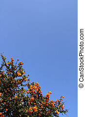 Shrub with red berries over a shaded blue sky (vertical)
