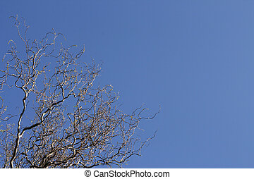 Sinuous tree over a shaded blue sky horizontal