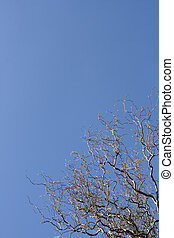 Sinuous tree over a shaded blue sky (vertical)