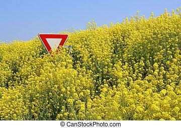 Stop aux OGM - Stop GMO - Champs de colza d�bordant sur la...