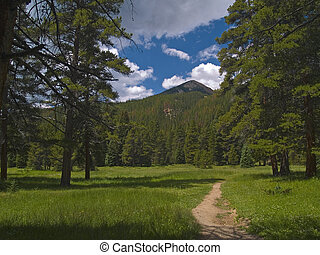 Vibrant Trail in the Rockies - This endless trail under Red...