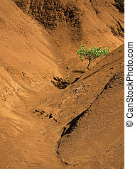 Single tree in red canyon - Vertical orientation of tree in...