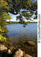 Scenic Lake Shore - Tree and rocks at scenic clear water...