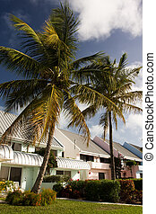 hotel cottages in tropical resort with palm trees