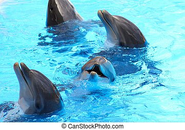 Smiling Dolphins - Closeup of three smiling bottlenose...
