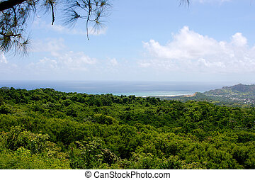 East coast of Barbados; photographed in October 2007