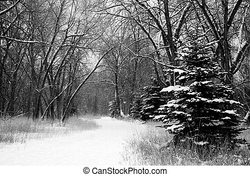 Winter Wonderland - snow covered trees line a snow covered...