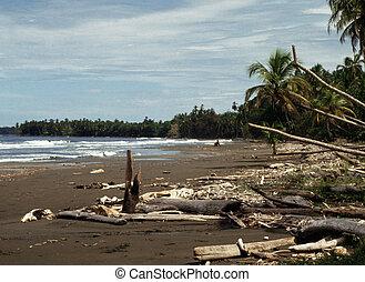 Beach in Costa Rica - Beach in Cosat Rica with palms and...