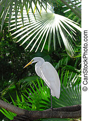 White crane on rope in palm forest
