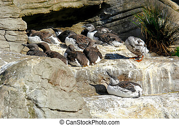 gaggle of birds - a gaggle of sea birds perched on a rock...