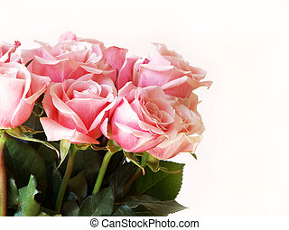 Valentines Day pink ros - pink roses isolated on white for...