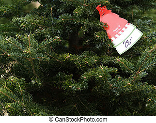 christmas tree shopping - a price tag on a Fraser Fir...