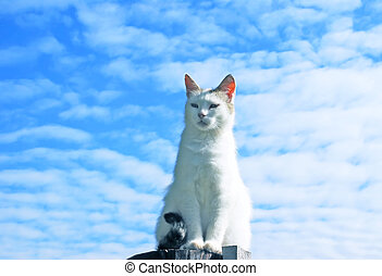 White cat. - A white cat on a background of the high;...