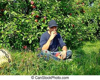 homem, comer, jovem, maçã