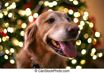 Christmas dog - Dog by the Christmas tree