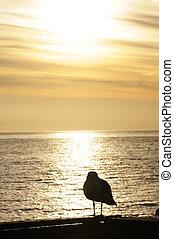 Sunrise in Santa Cruz - Sunrising in Santa Cruz, California,...