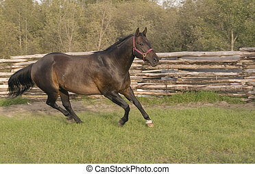 Running horse. - Horse running in his paddock