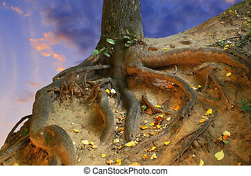Look in a root. - Powerful, roots reliably keep a tree on a...