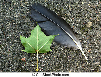 Loss - A feather of a bird and a leaf of the tree, fallen to...