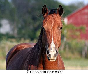interesado, caballo