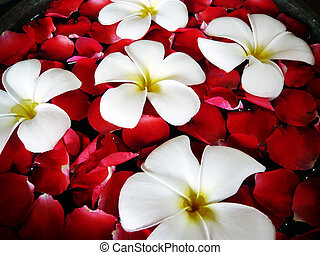 Tropical spa close-up - fragapani and rose petals floating...