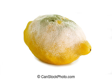 Lemon gone bad - Lemon fruit damaged by green mould