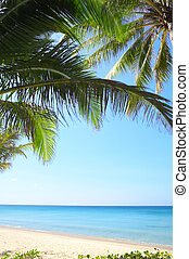 palm leaf - View of nice tropical empty sandy beach with...