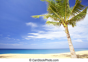 palm on beach - View of nice tropical empty sandy beach with...