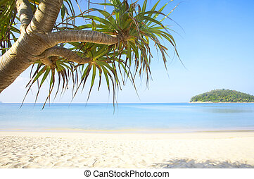 tropic leaf - View of nice tropical empty sandy beach with...