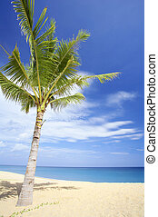 one - View of nice tropical empty sandy beach with some palm