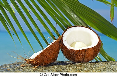 tropic scene - view of two coconut halves and palm on sea...