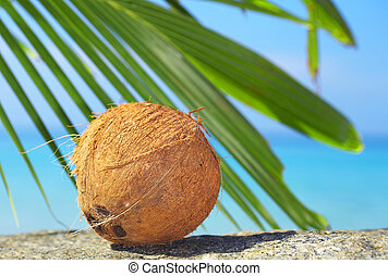 coconut - view of lonely fresh coconut on sea shore