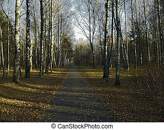 autumn road - yellow sheets on earth and road, sunset rays...