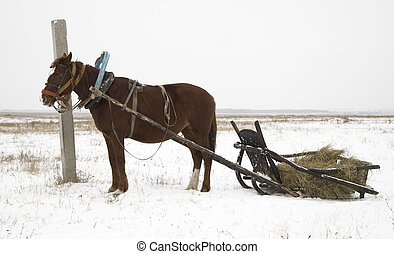 horse and sleigh in nothern Kazakhstan
