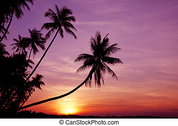 Palms at Sunrise - Coconut palm trees silhouetted against...