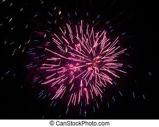 Fire flower - firework, fire flower, purple aster