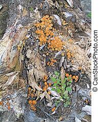 Mushroom 4 - On the Apple Glade Romania, September 2005
