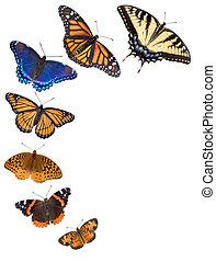 蝴蝶, 邊框, 背景