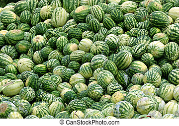 rotting melons - A lot of rotting watermelons