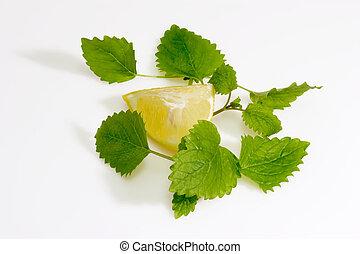 Lemon Balm Leaves with Lemon