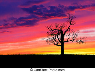 Lone tree at sunset - One bare silhouetted tree in an open...