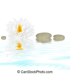 Natural Beauty - Abstract of a white lotus lily gladstoniana...