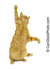 Dancing - Cat standing on ist bag legs danciing.