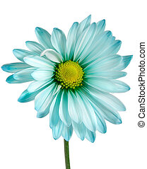 closeup on daisy - closeup on blue daisy