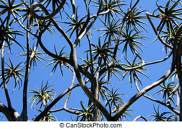 Cactus Tree - Tall cactus tree against a blue sky in...