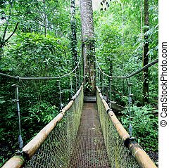 Jungle Bridge - Zip lining or canopy in Costa Rica is a...