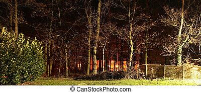 trees lit by lights at nighttime